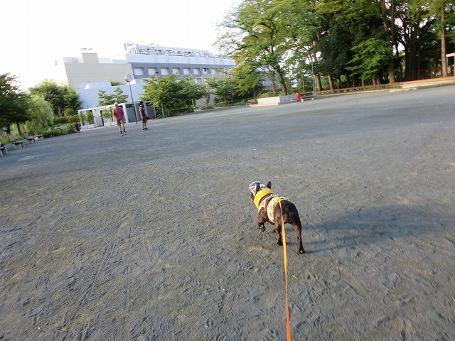 160807お散歩⑦