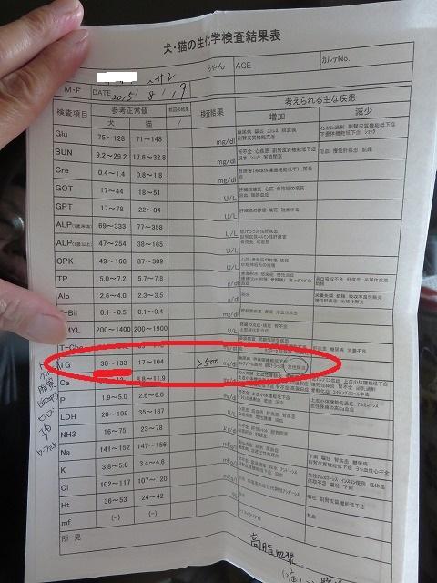 160807武蔵&ひな病院⑤