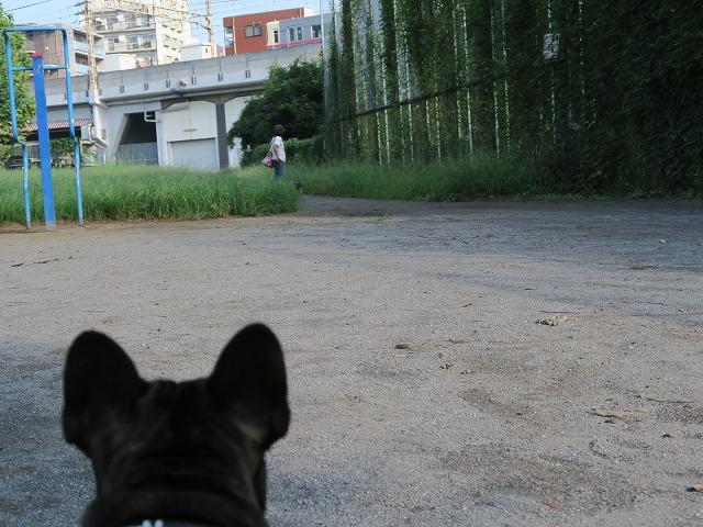 160917お散歩④