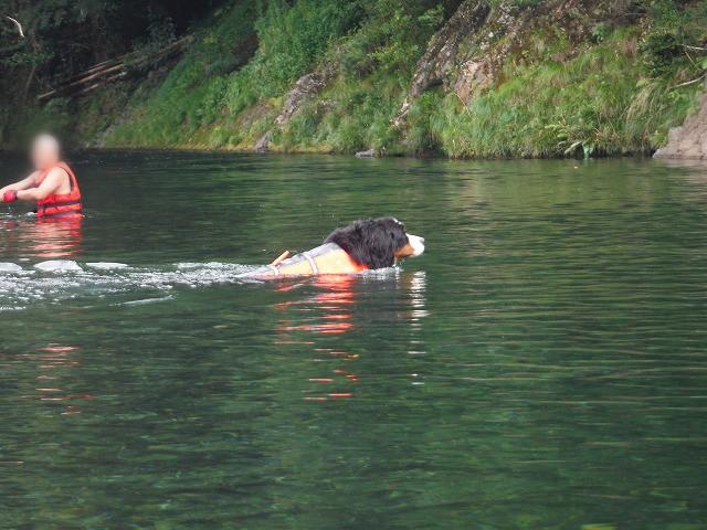 ハナ泳ぐ2