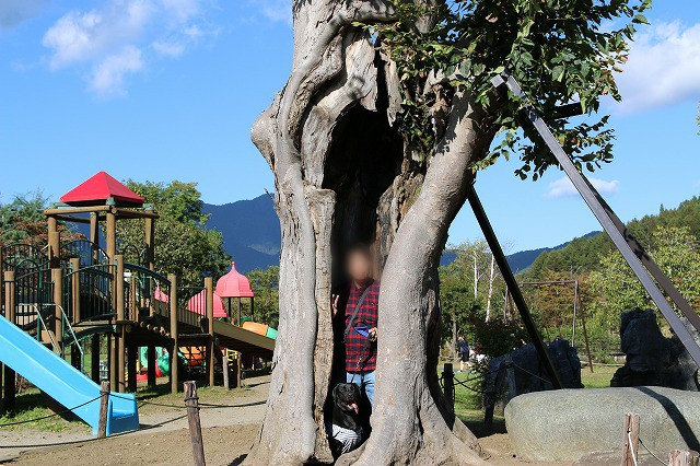 マルしあわせの木
