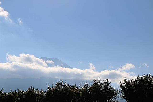 花の公園から富士山