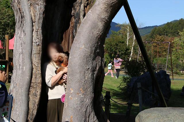 幸せの木キアラ