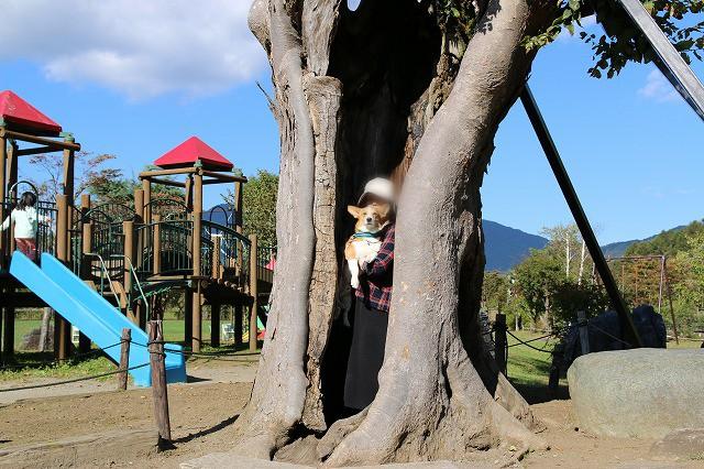 幸せの木ムギ