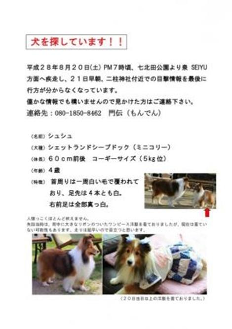 シュシュちゃん fc2blog_20160825080217b1cs