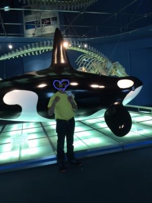 orca(3)_convert_20160427100824.jpg