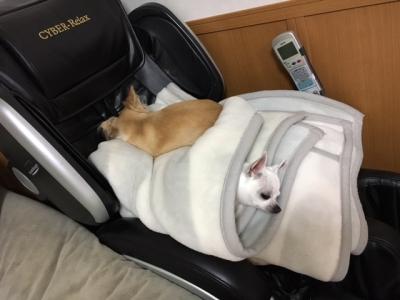 2匹の寝方2