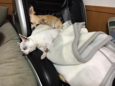 2匹の寝方3