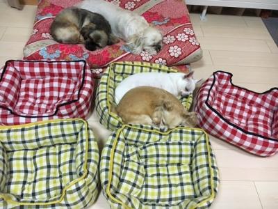 5匹の寝方1