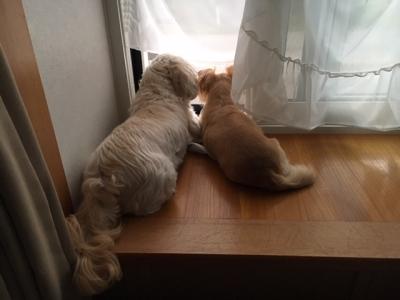 クララともんち仲良く窓の外