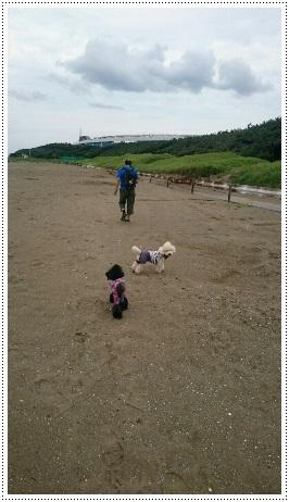 幕張の浜 フリーリード