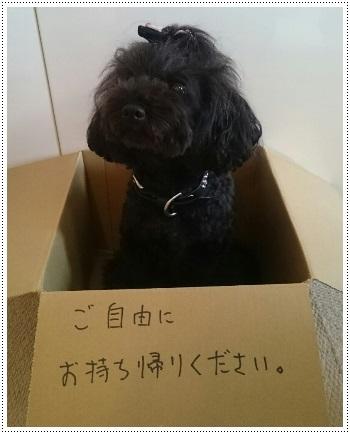 捨て犬ルナ