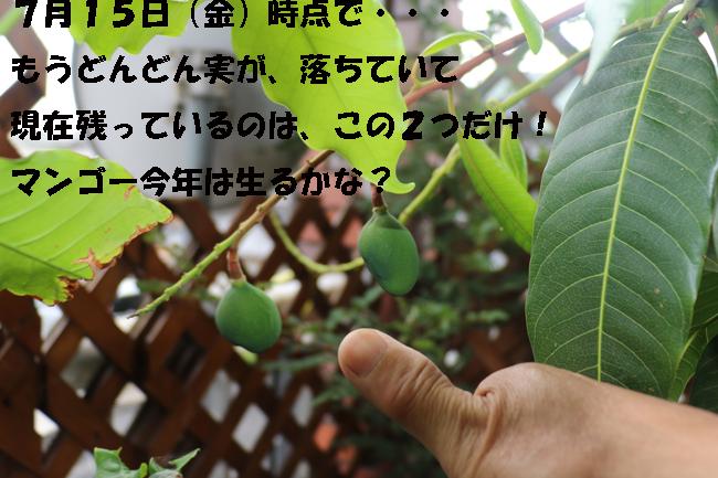 001-87564-86754-9876549.jpg