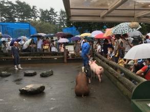 雨の日でも楽しめる!朝から晩まで豚尽くしの最強スポット!「サイボクハム」♪ BBQ!アスレチック!日帰り温泉のコラボ!
