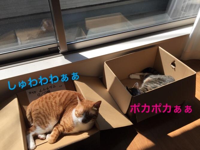 fc2blog_20160524120749df6.jpg