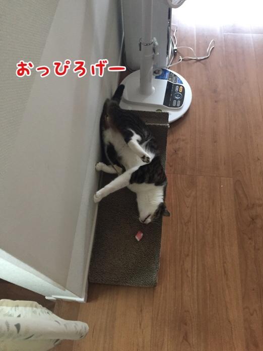 fc2blog_20160723172521a6d.jpg