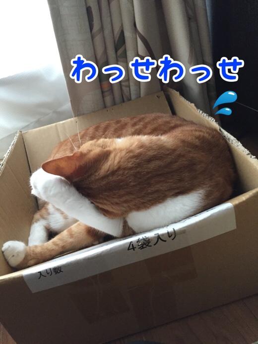 fc2blog_20160723172741d73.jpg