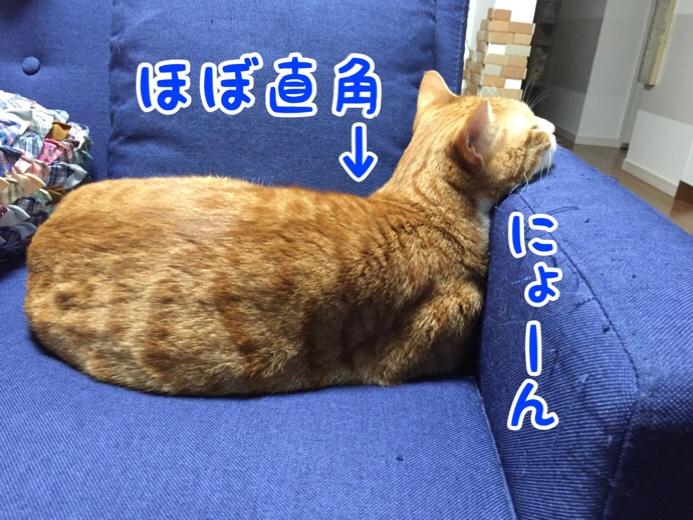 fc2blog_20160726144534e30.jpg