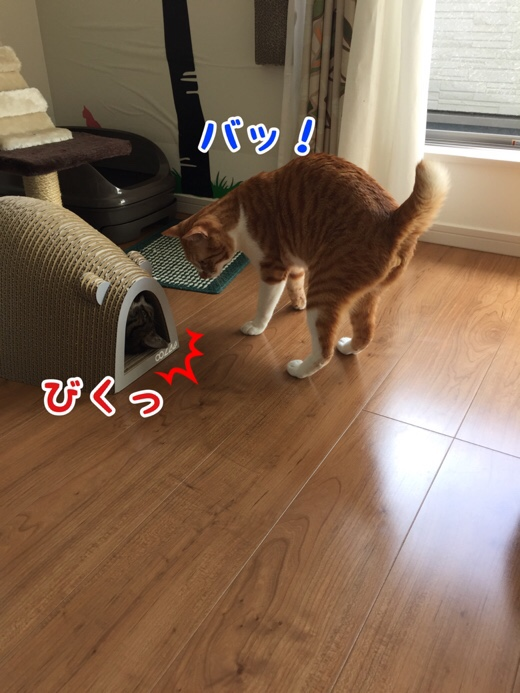 fc2blog_201607270957308f4.jpg