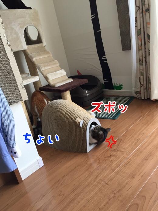 fc2blog_2016072709591930c.jpg