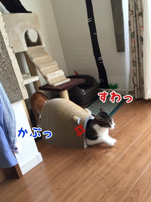 fc2blog_201607271000356a8.jpg