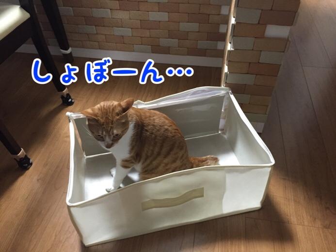 fc2blog_20160729121741b3f.jpg
