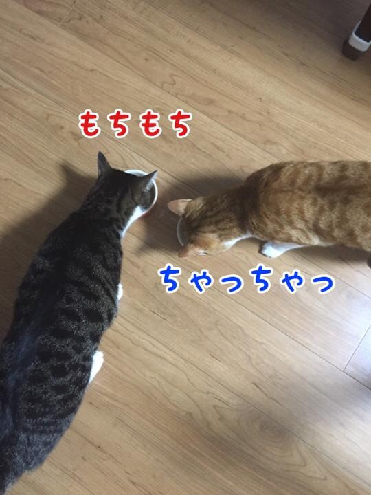 fc2blog_20160731115937086.jpg