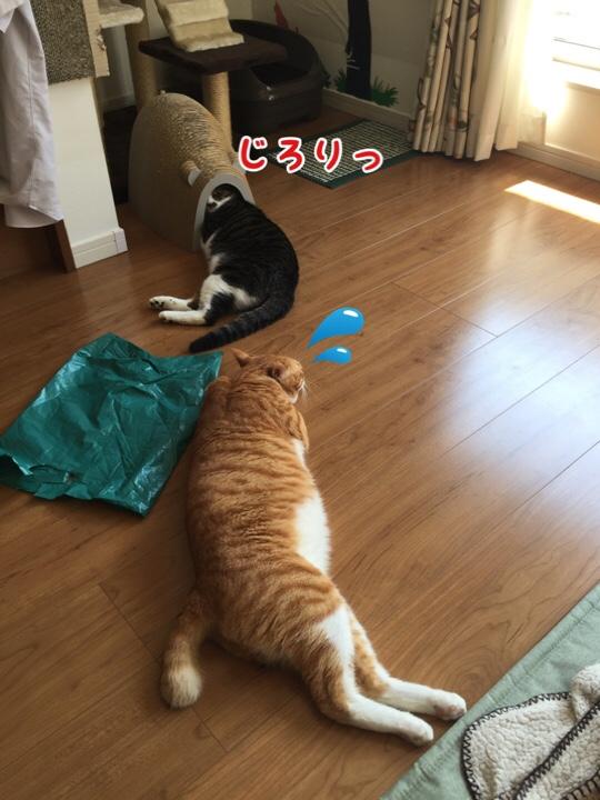 fc2blog_201608281619594ee.jpg
