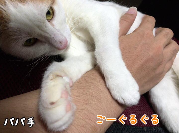 fc2blog_20160924141159f48.jpg