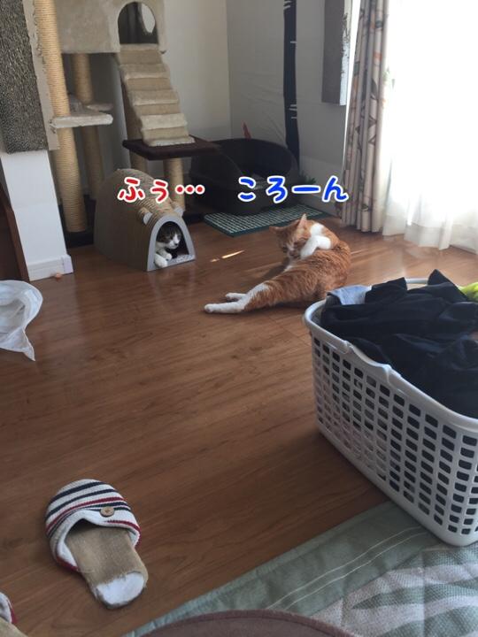 fc2blog_201609271350508da.jpg