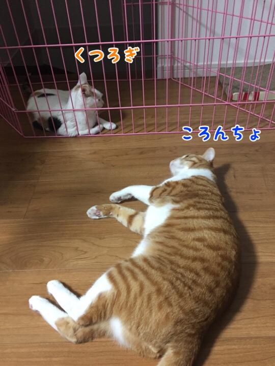 fc2blog_20160927135139872.jpg