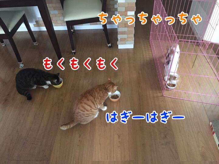 fc2blog_20160928161658f71.jpg