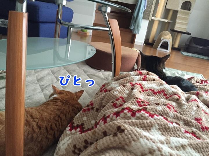 fc2blog_20160930154658f2e.jpg
