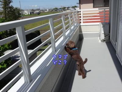 3bGKaRpY9RSMyrv1461577008_1461577156.jpg