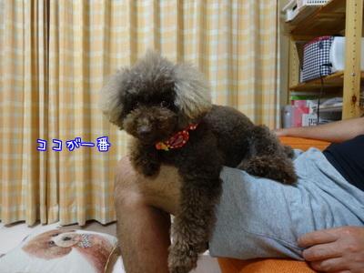 ZMAXjO6yHRbtilO1465379557_1465379633.jpg