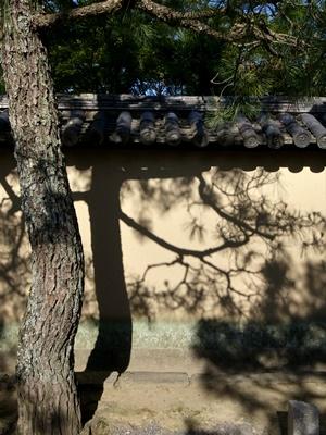 大徳寺土塀に映る松1606