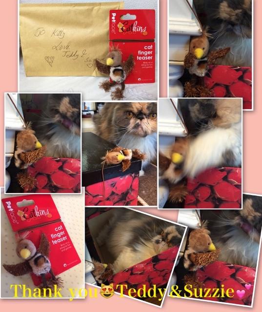 kitty15 (537x640)