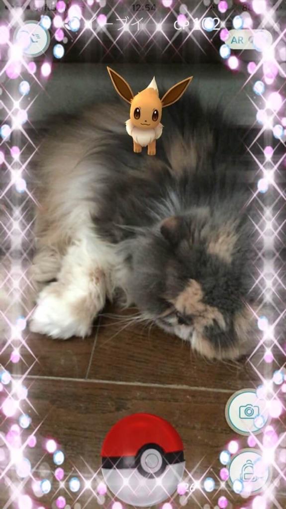 kittyとイーブイ