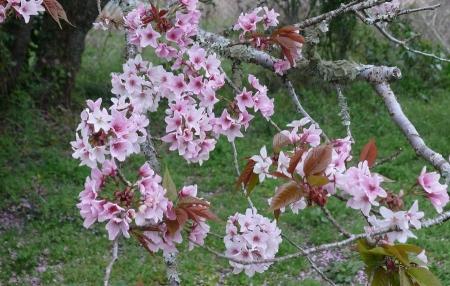 桜・・名前は・・わかりません