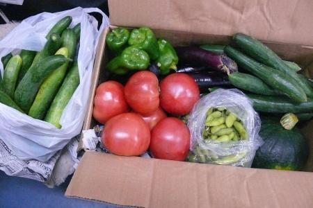 お野菜とキュウリ