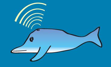 イルカの頭音