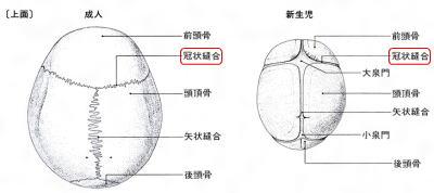 赤ちゃん頭蓋骨