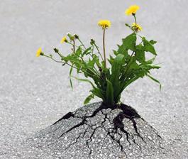 コンクリート花