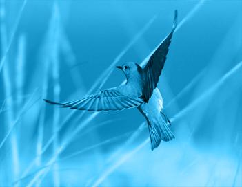 青い鳥999
