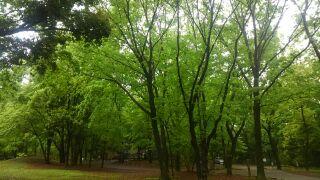 2小宮公園
