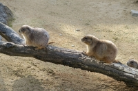 BL160417いしかわ動物園6IMG_0575