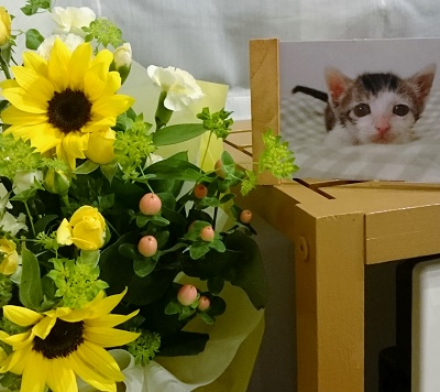 ドンちゃんにお花をmさんから