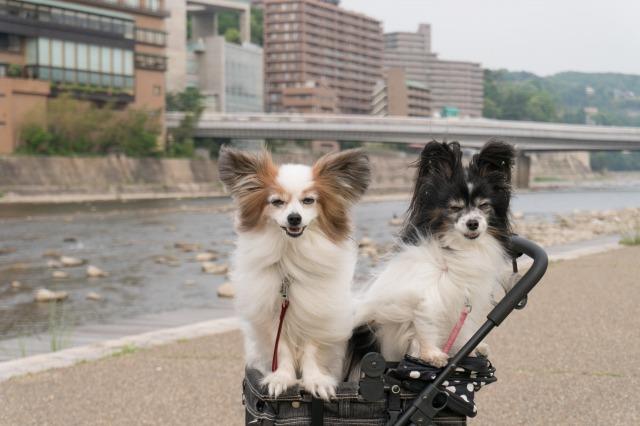 LEVINくんの朝散歩に突撃!-003