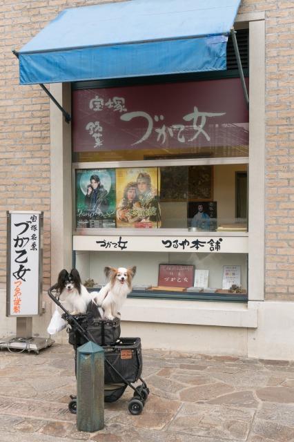 LEVINくんの朝散歩に突撃!-017