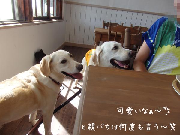 cafe1_201608312112537c8.jpg